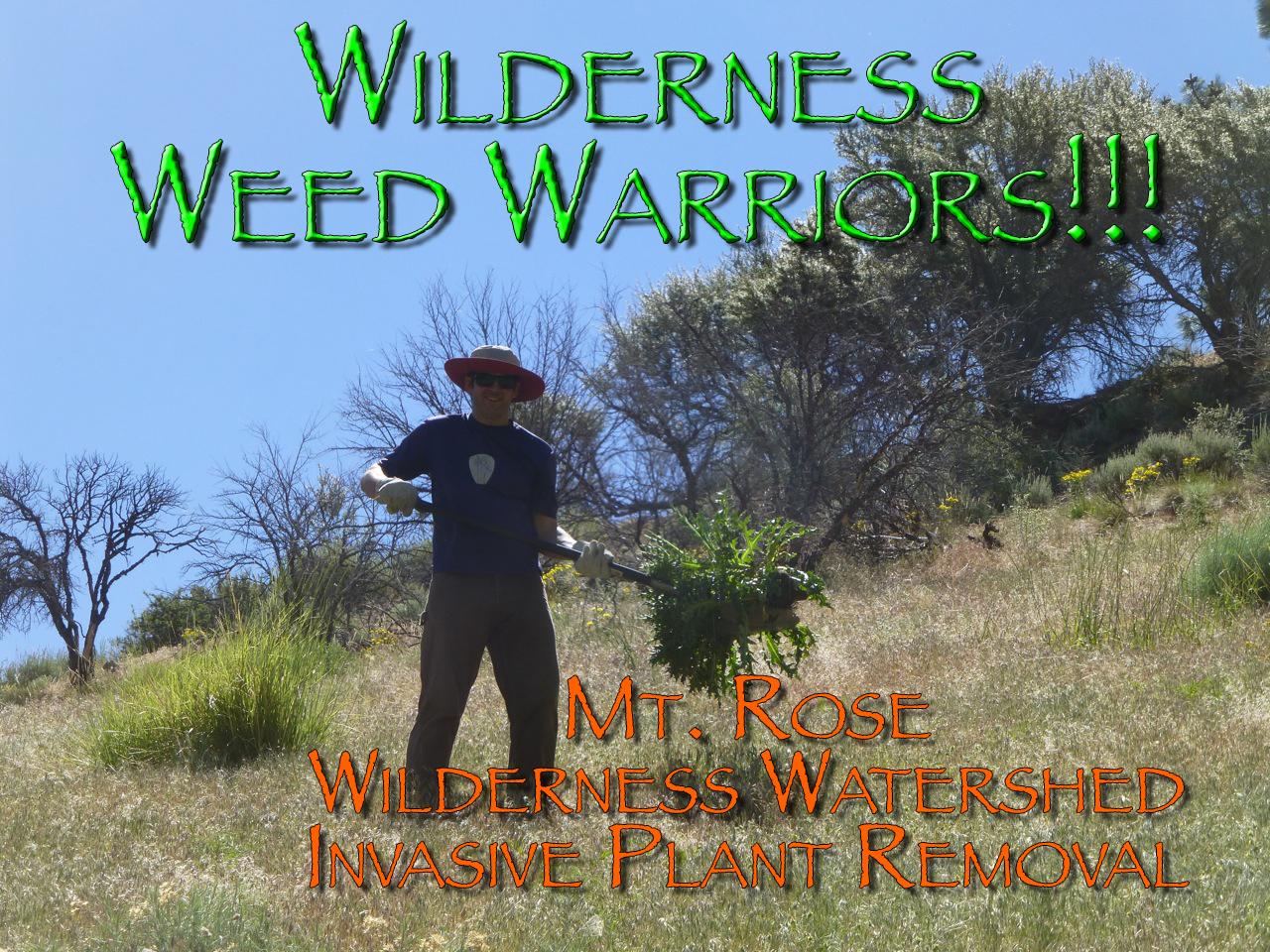 06-08-2013_mt_rose_weed2_RA_14.jpg