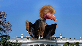 Trump_vulture_DonkeyHotey.jpg