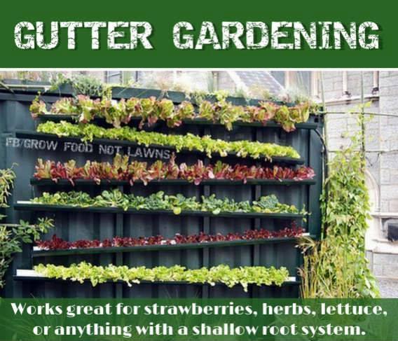 gutter_garden.jpg