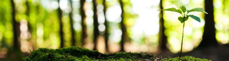 Environmental_Header.jpg