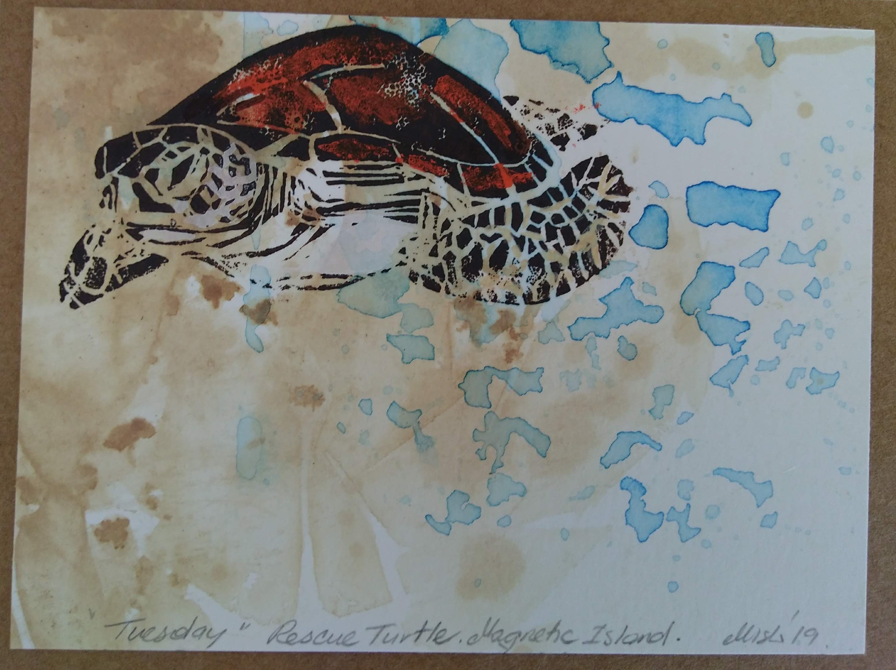 47_Michelle_McGuinn__Tuesday_-_Rescue_Turtle_Magnetic_Island.jpg