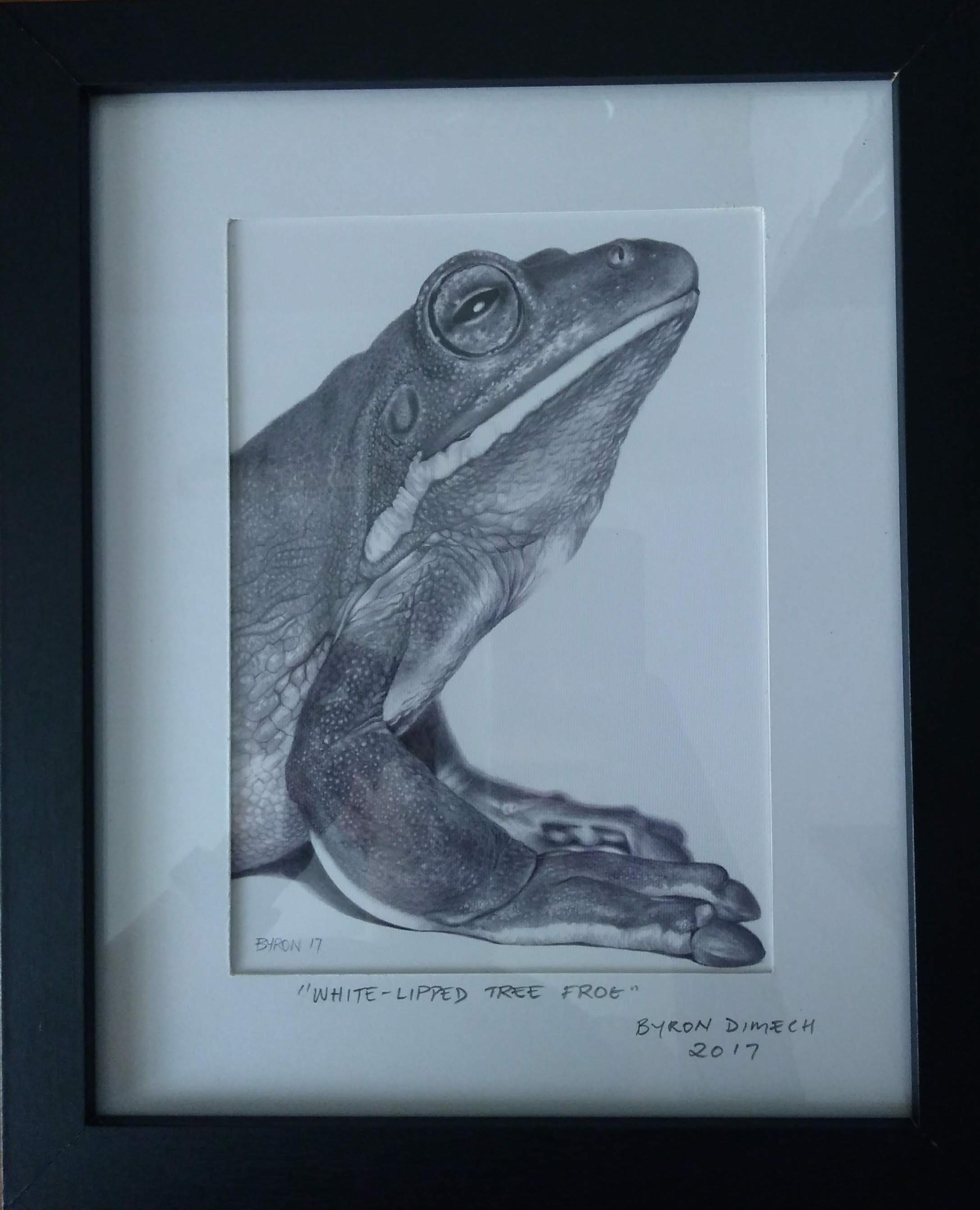 40_Byron_Dimech__White-lipped_Tree_Frog.jpg