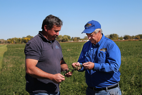 Albert Mulder, NRCS Nevada State Agronomist (l), and Rick Lattin stand in a field of alfalfa at Lattin Farms in Fallon, Nev., where NRCS has assisted with irrigation improvements that helped with water efficiency.