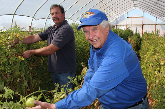 Rick Lattin, of Fallon, Nevada's Lattin Farms, shows off tomatoes ripe in October. With NRCS assistance, Lattin installed high tunnels, or hoop houses, that have extended his growing season.