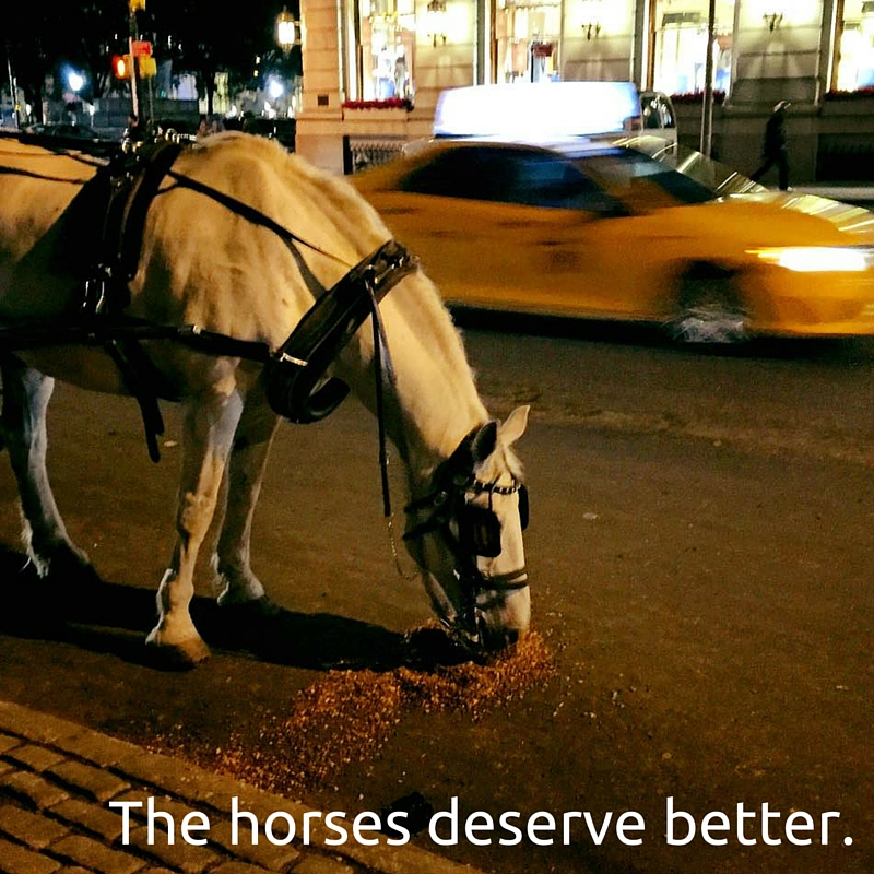 Horses Deserve Better