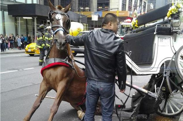 Cruel And Inhumane Horse Drawn Carriages Nyclass