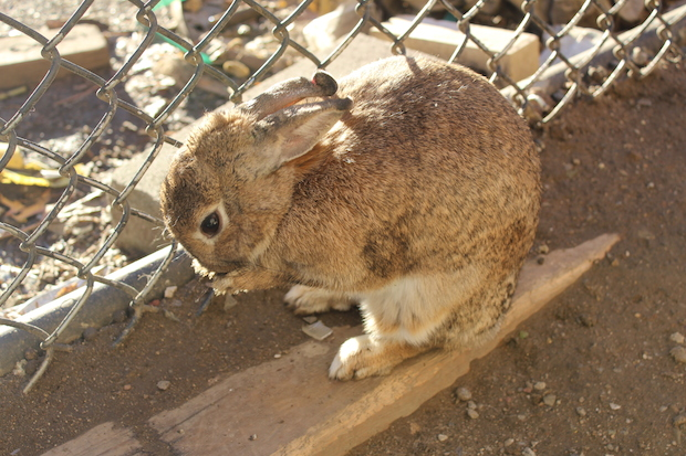 2015-01-27_Bunny.jpg