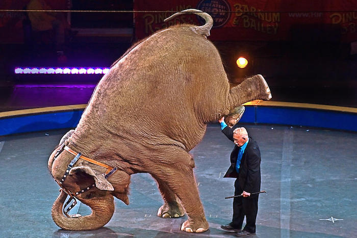 2015-03-06_Circus_Elephant.jpg