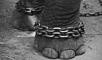 2015-03-17_Elephant_3.jpg