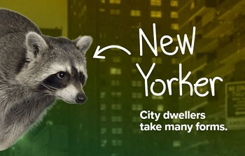 nyc_raccoon.jpeg