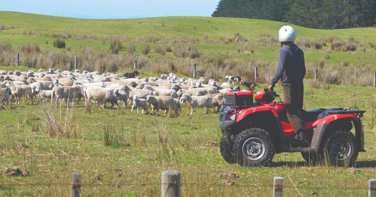 What's Labour doing for rural New Zealand? thumbnail