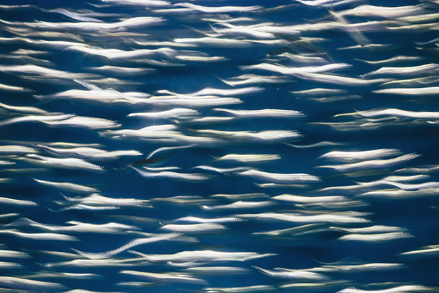 sardines_1_(1).jpg