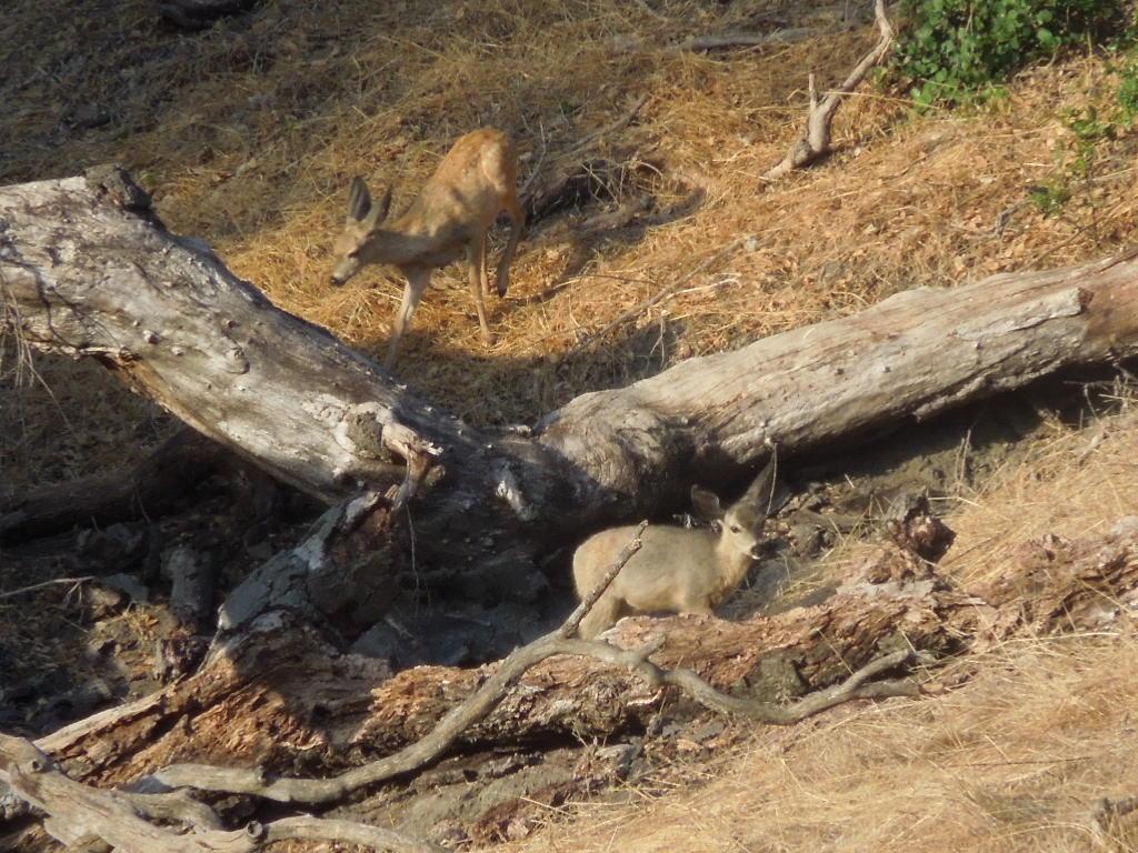 2012-08-15-Deer-family-at-Mother-Oak-4.jpg