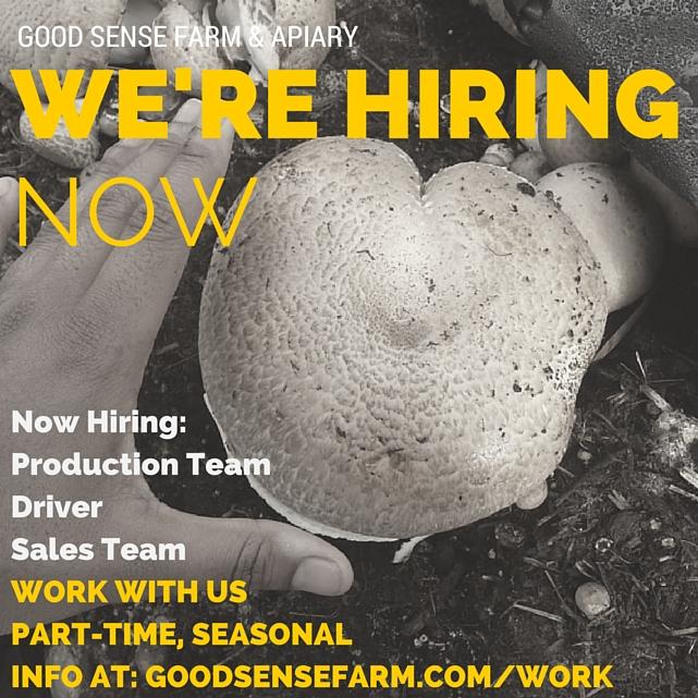good_sense_hiring.jpg