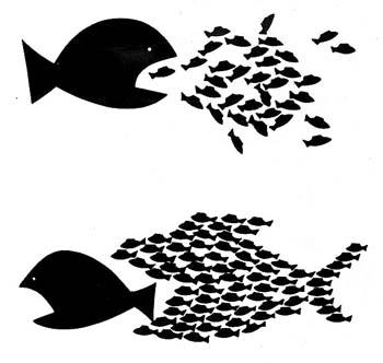 orgfish.jpg