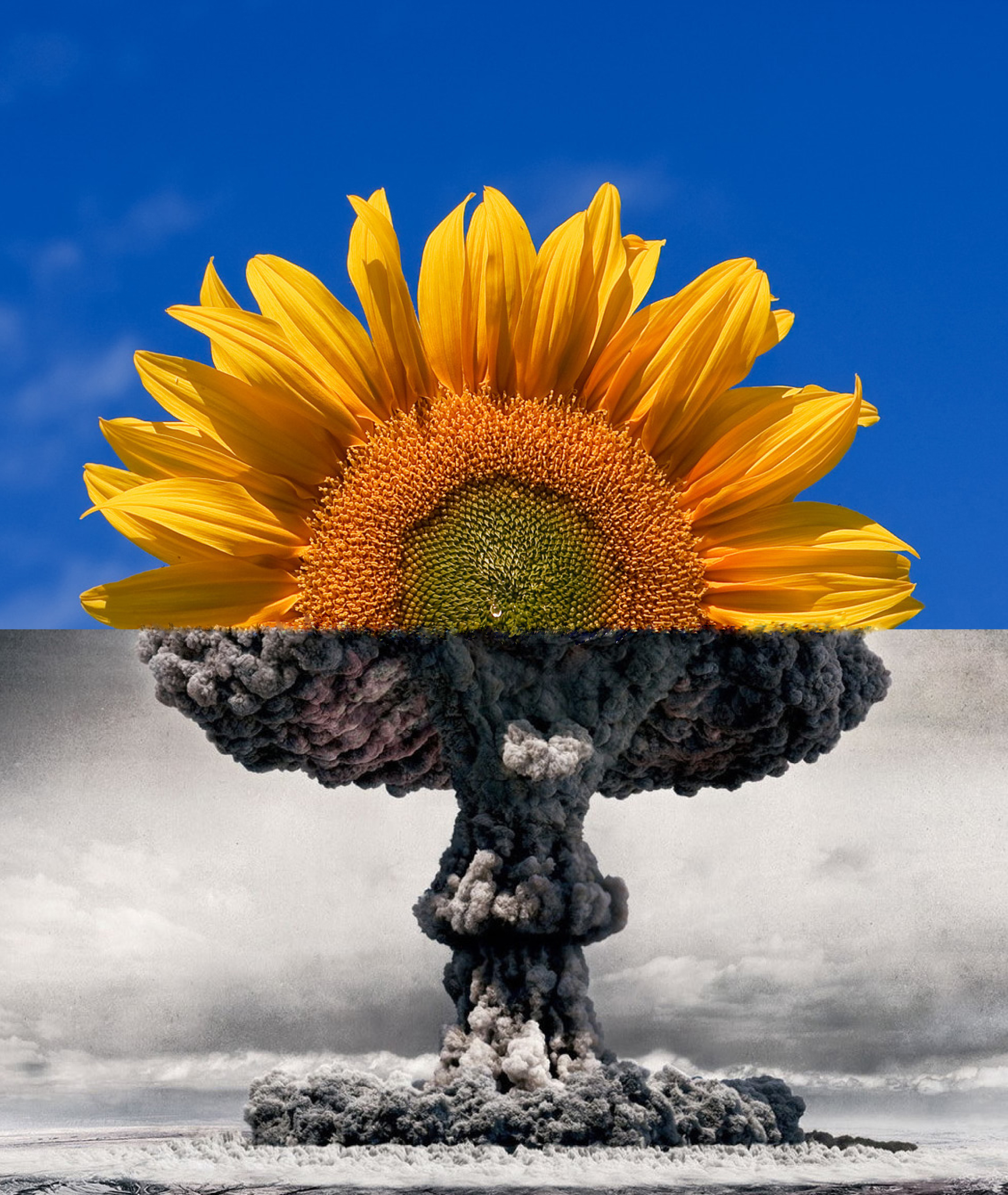 Mushroom_cloud_becoming_sunflower.jpg