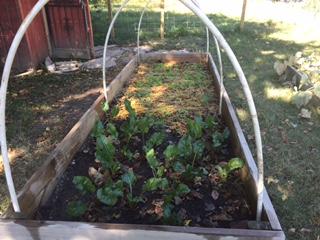 garden5.jpeg