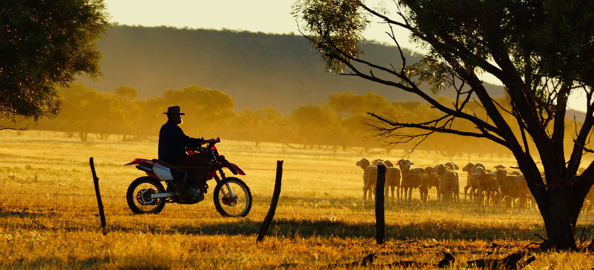 Queensland election: Landholders call for $24 million increase in Nature Refuge funding to protect wildlife and create work in regional areas