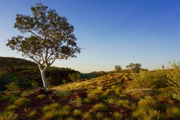 Boodjamulla National Park (Lawn Hill) by Will Parker