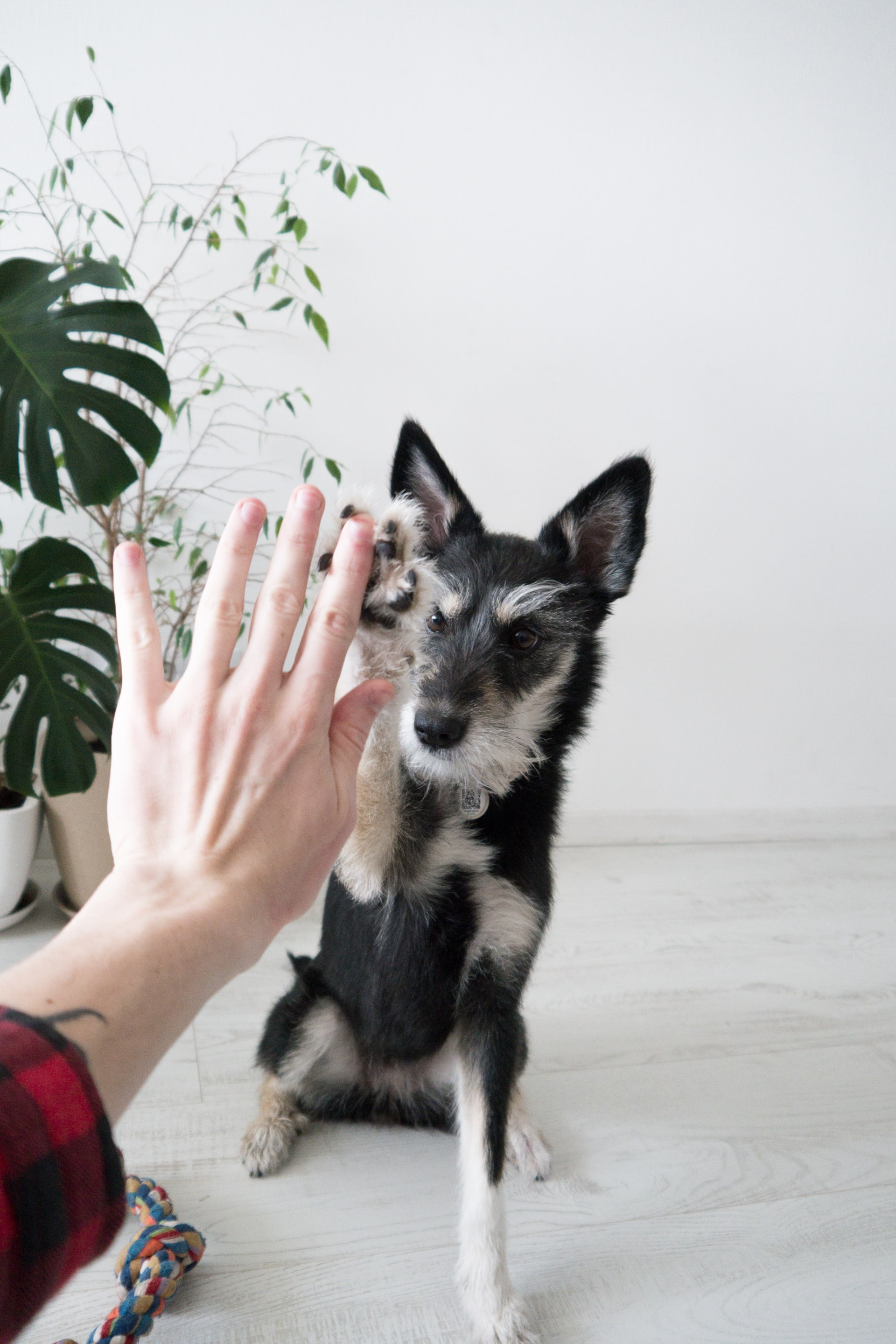High five with dog