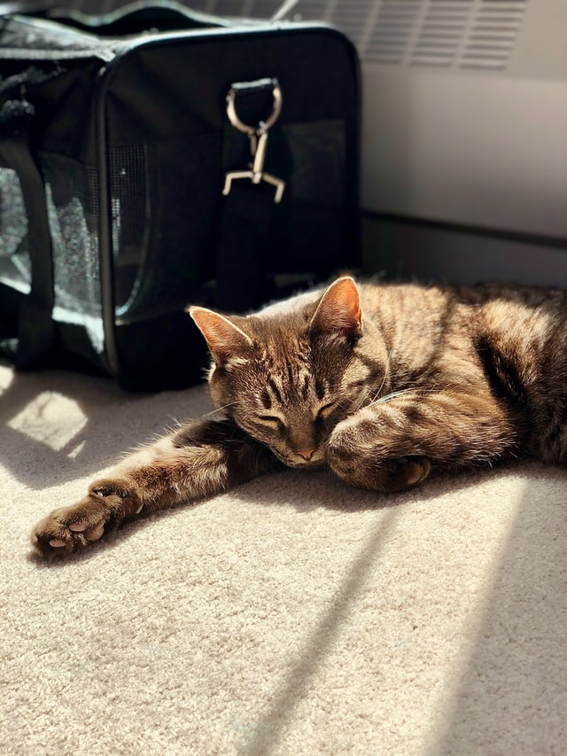 cat beside carrier