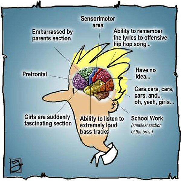 Adolescent_Brain.jpg
