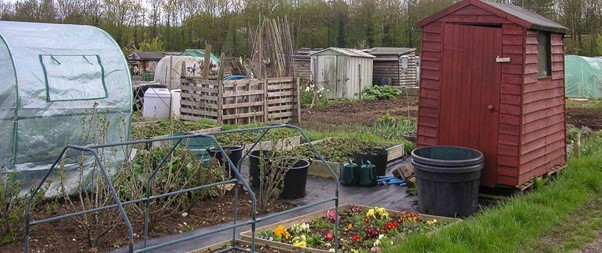 An allotment can be very productive