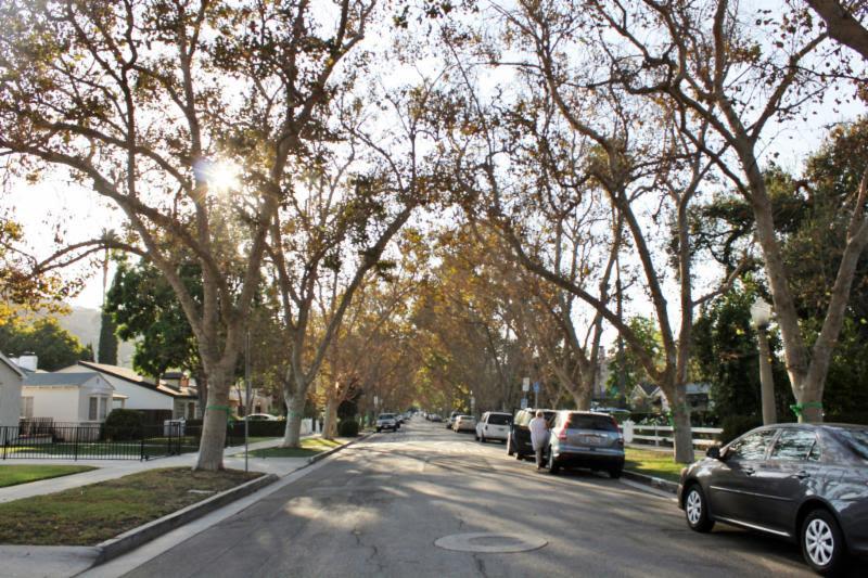 Driveway_tree_motion.jpg