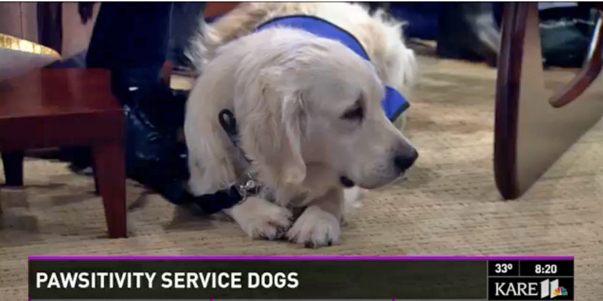 Olaf the classroom autism dog on television