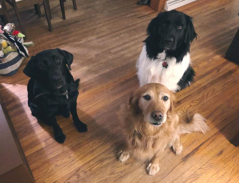 When one dog gradautes, everyone gets treats