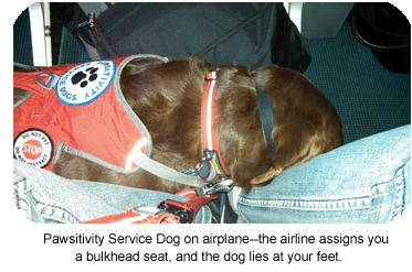 Service dog traveling on an airplane