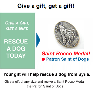 Rescue Dog from Syria