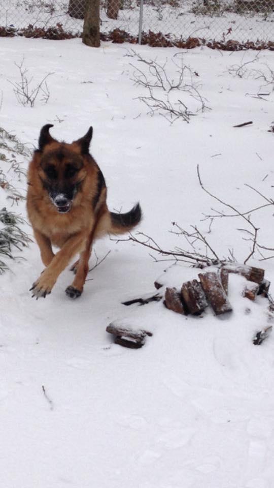 Yorrdan in the snow