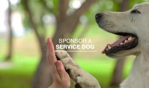 Sponsor a service dog.