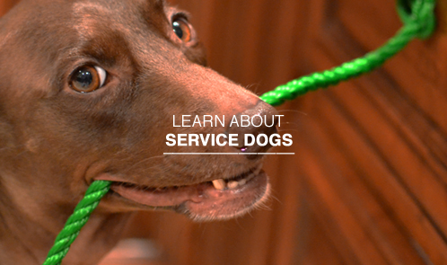 Learn about service dogs.