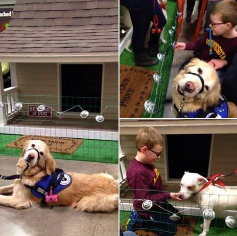 Bailey the autism service dog