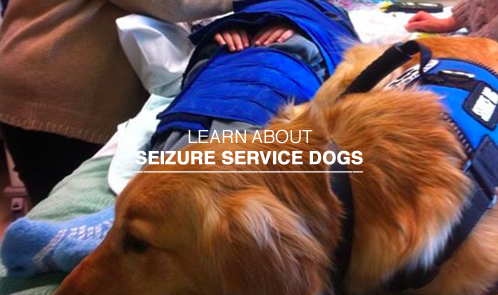 Learn about seizure service dogs.