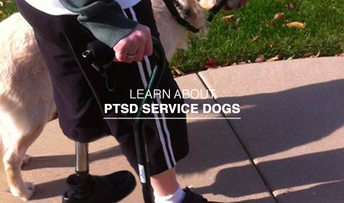 Learn about PTSD service dogs.