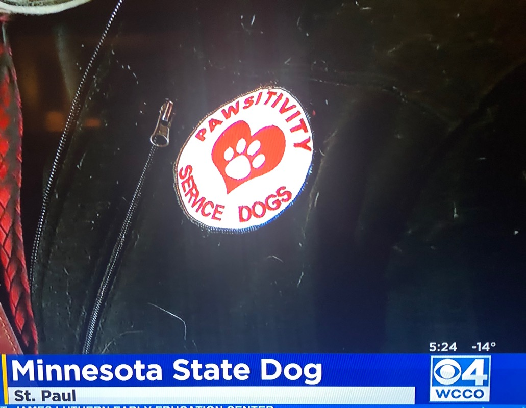 Pawsitivity partnering to pass the bill for a MN State Dog