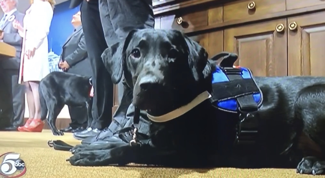 Daniel the service dog in training poses for the tv camera