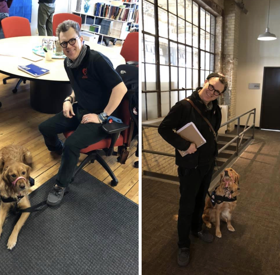 Service dog in office
