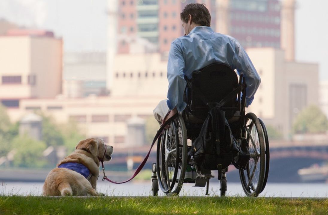 Service Dog with his man