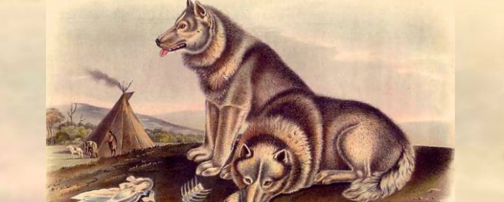 Wolves to dogs