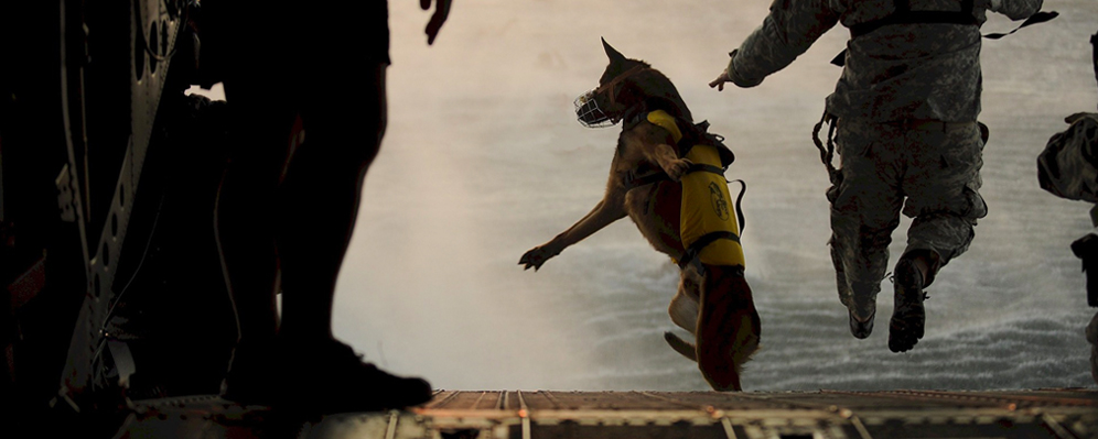 Military dog jumping from a plane