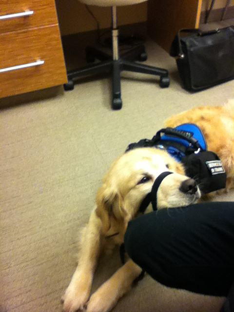 Service dog at the office