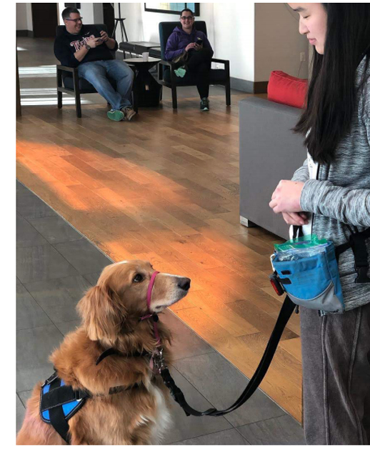 A service dog who goes to college with her girl