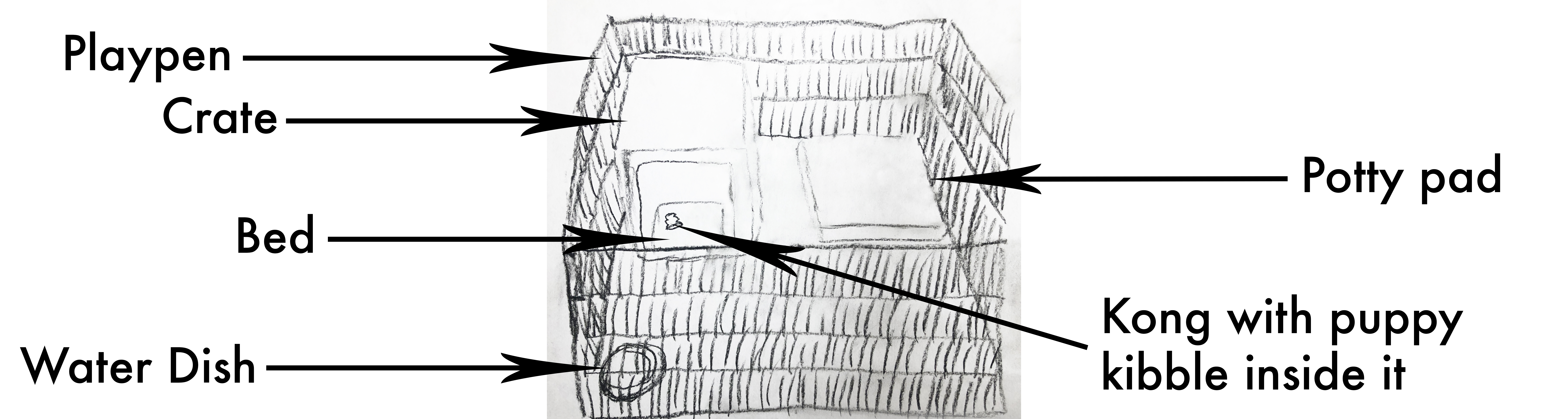 Suggested crate setup for a puppy