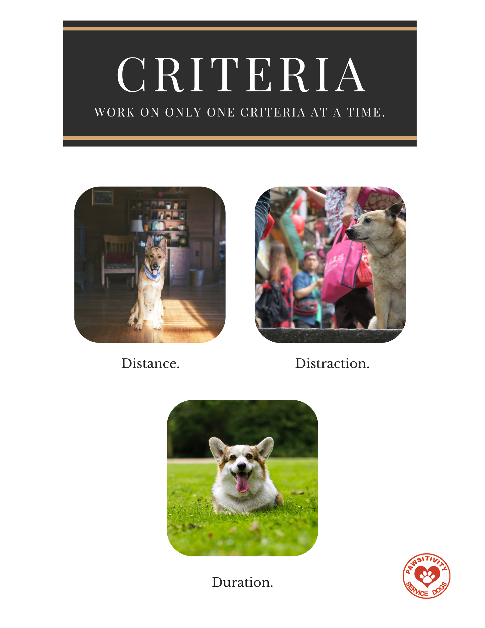 Dog Training Criteria worksheet