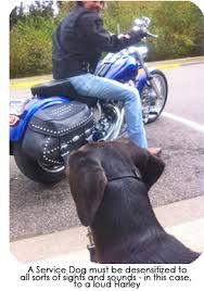 Dog learning to be calm near a motorcycle
