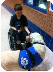Therapy dog with boy in wheelchair